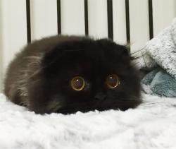 CatKitKat