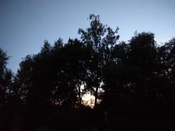 Sofia203