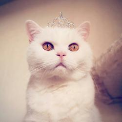Meow-Tyan