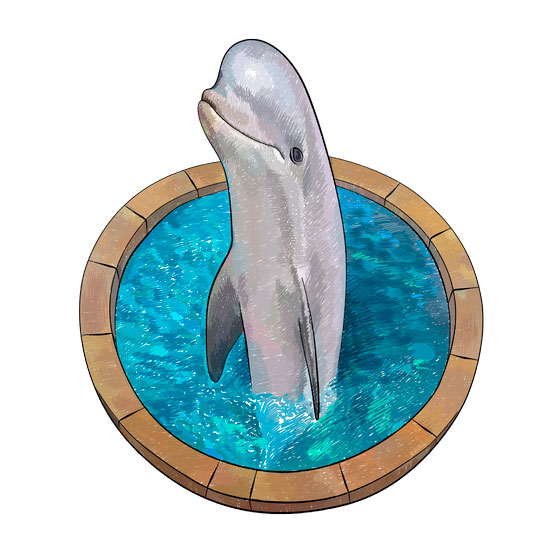 Как нарисовать 3D рисунок дельфина в бассейне поэтапно