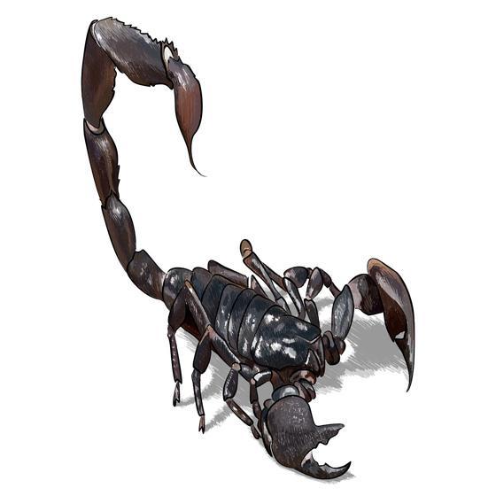 Рисуем 3D рисунок черного скорпиона шаг за шагом