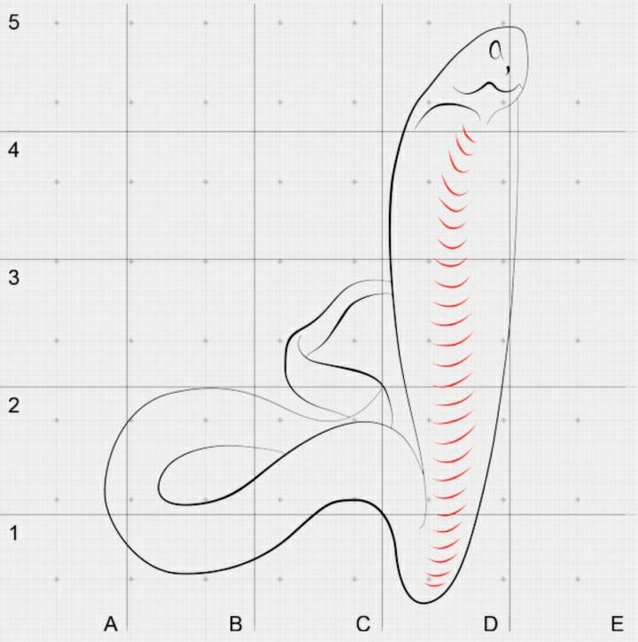 Как  нарисовать кобру в 3D на бумаге