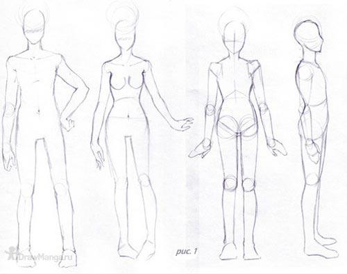 и женского тела (рис. 1).