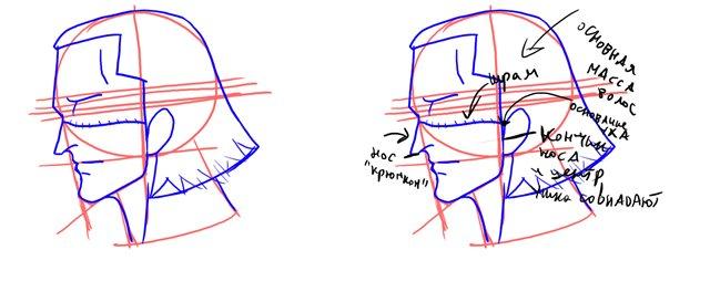 как рисовать лицо в профиль | Сделай ...: dkls.pp.ua/?p=3420
