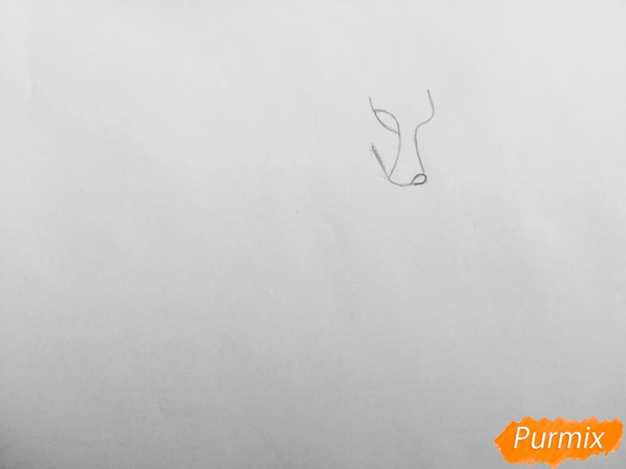 Рисуем аниме волчицу - шаг 1