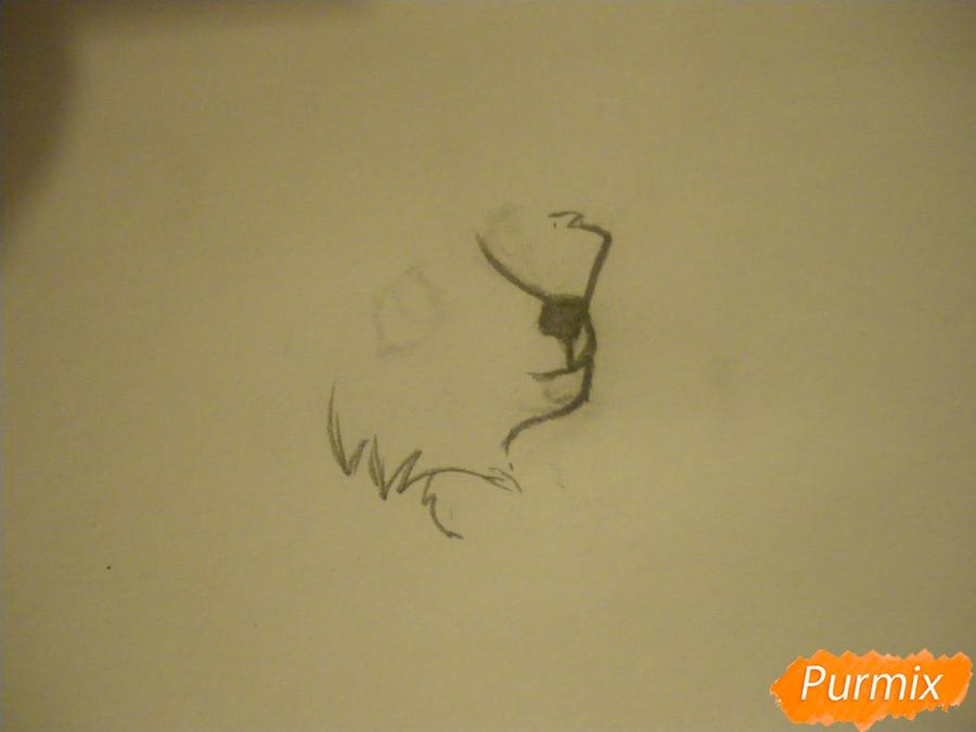 Рисуем серую аниме волчицу - шаг 1