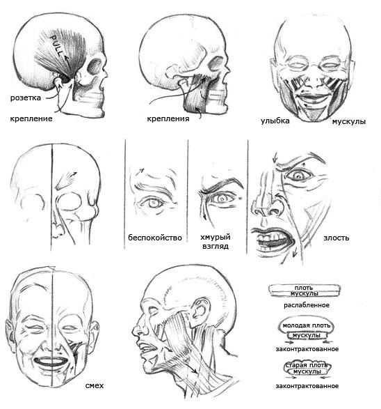 Рисуем голову человека - шаг 1