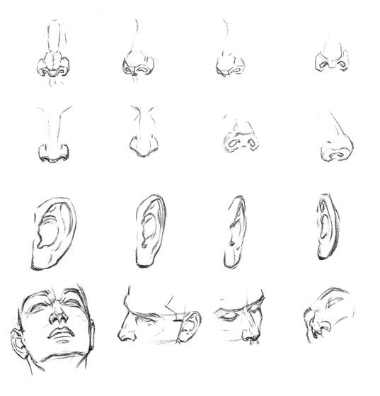 рисование носа и ушей