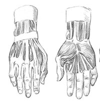 Анатомия рук для художников