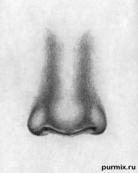 человеческий нос простым карандашом