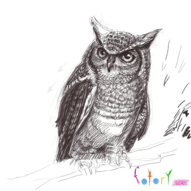 Рисуем реалистичную сову (филина) - шаг 10