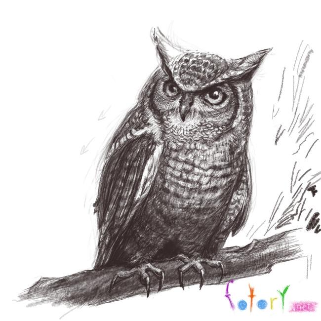 Рисуем реалистичную сову (филина) - шаг 11