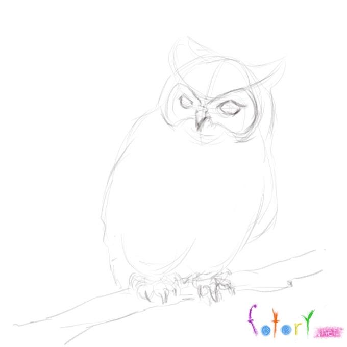 Рисуем реалистичную сову (филина) - шаг 4