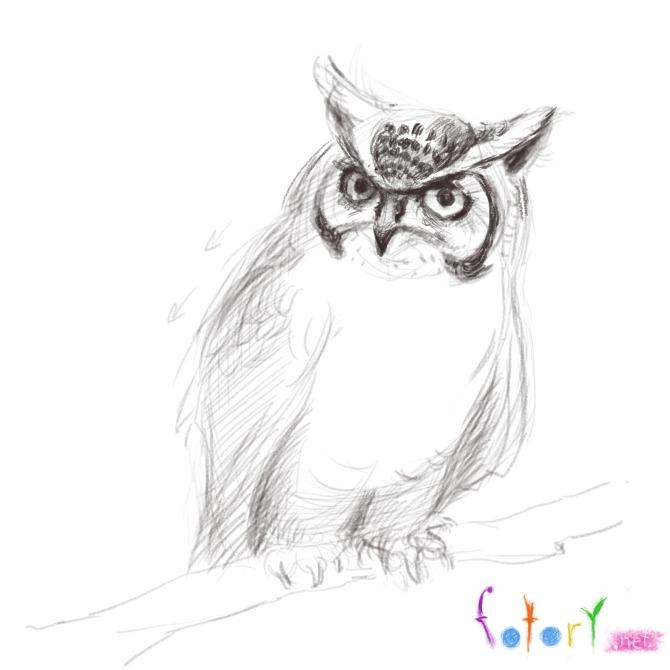 Рисуем реалистичную сову (филина) - шаг 7