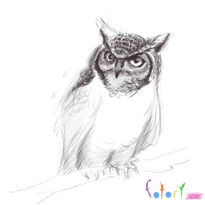 Рисуем реалистичную сову (филина) - шаг 8
