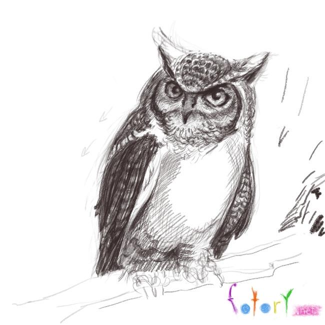 Рисуем реалистичную сову (филина) - шаг 9