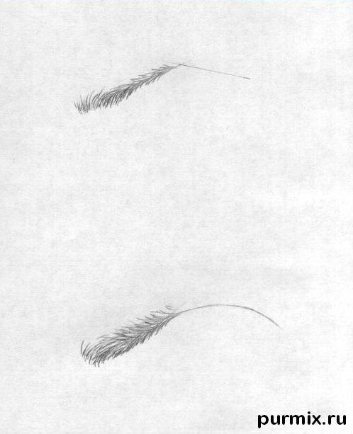 Рисуем женскую и мужскую бровь простым