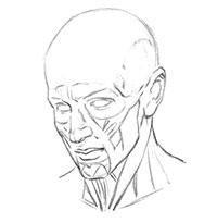 Принцип работы мышц для рисования