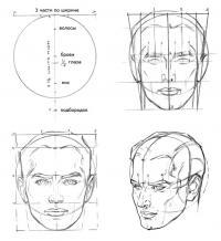 Пропорции головы мужчины.