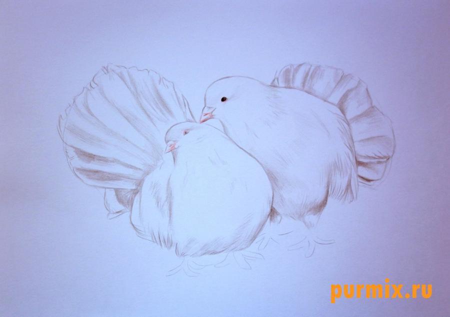 Рисуем двух голубей на 14 февраля цветными карандашами - шаг 4