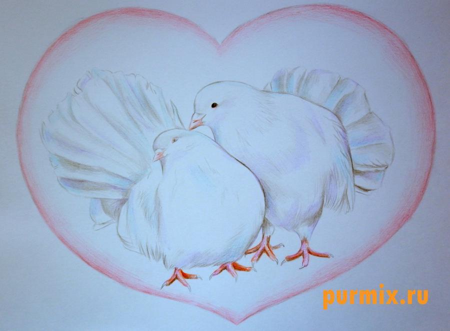 Рисуем двух голубей на 14 февраля цветными карандашами - шаг 6