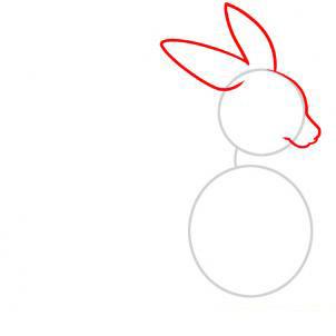 Рисуем кенгуру для детей - шаг 2