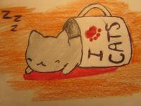 Фотография котика спящего в кружке детям