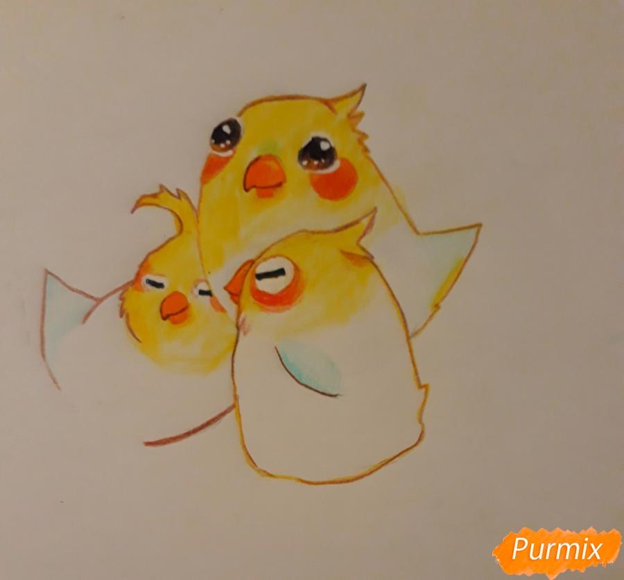 Рисуем трех милых попугайчиков карандашами поэтапно