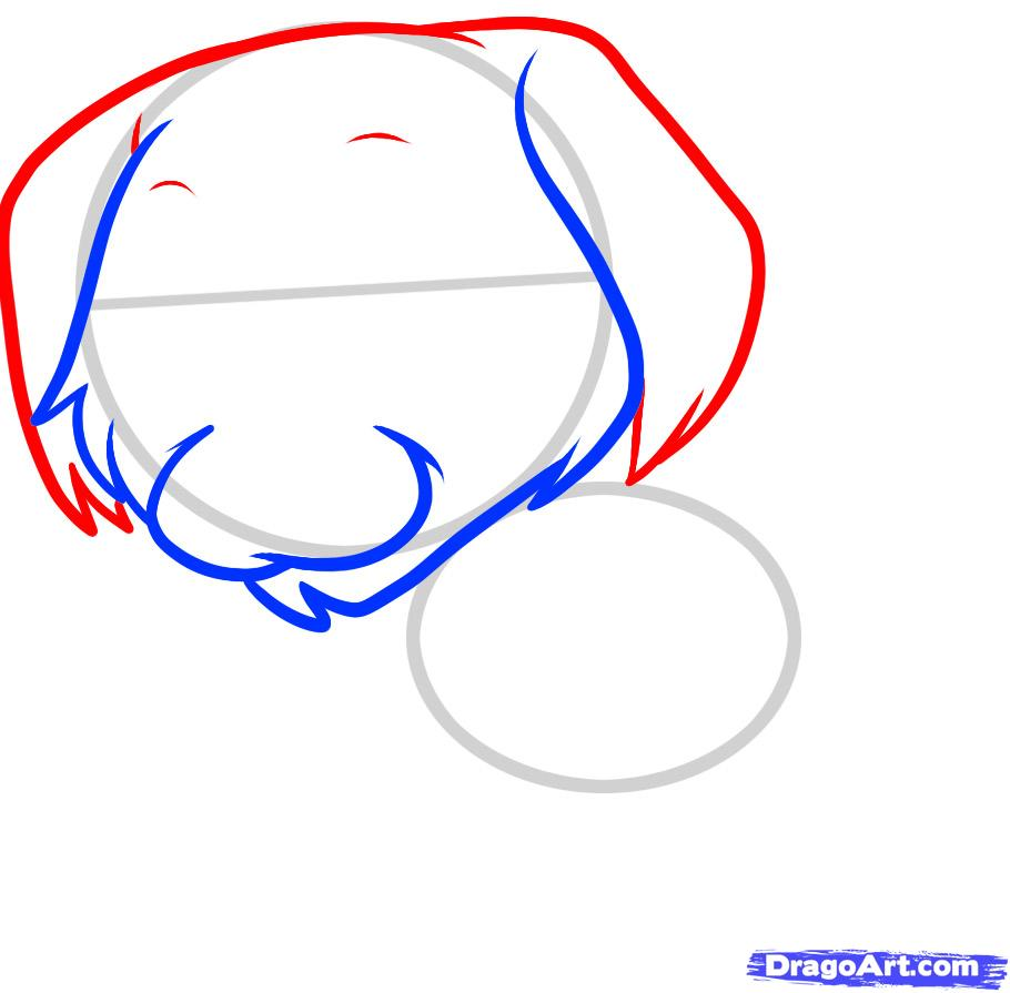 Рисуем щенка золотистого ретривера ребенку - фото 3