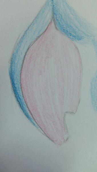 Рисуем Стича цветными карандашами - шаг 16