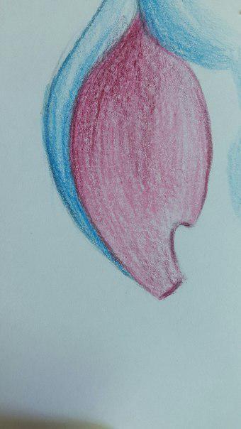 Рисуем Стича цветными карандашами - шаг 18