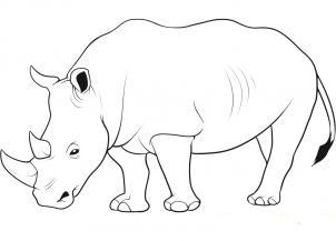 Фото носорога карандашом