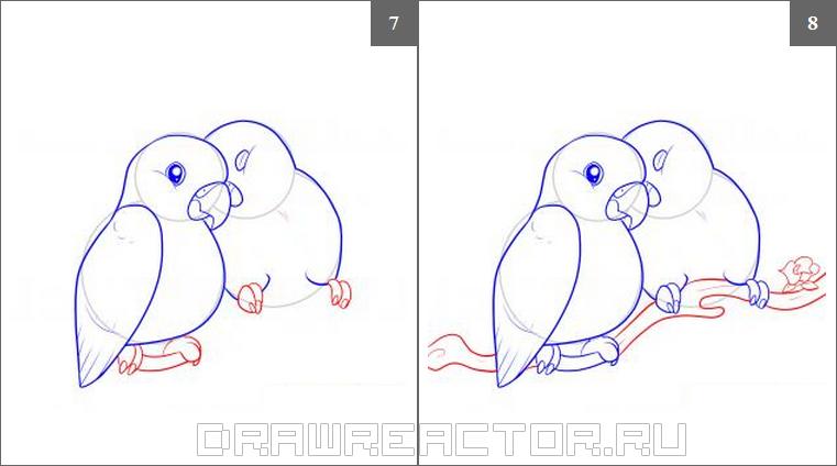 Как нарисовать попугая карандашом