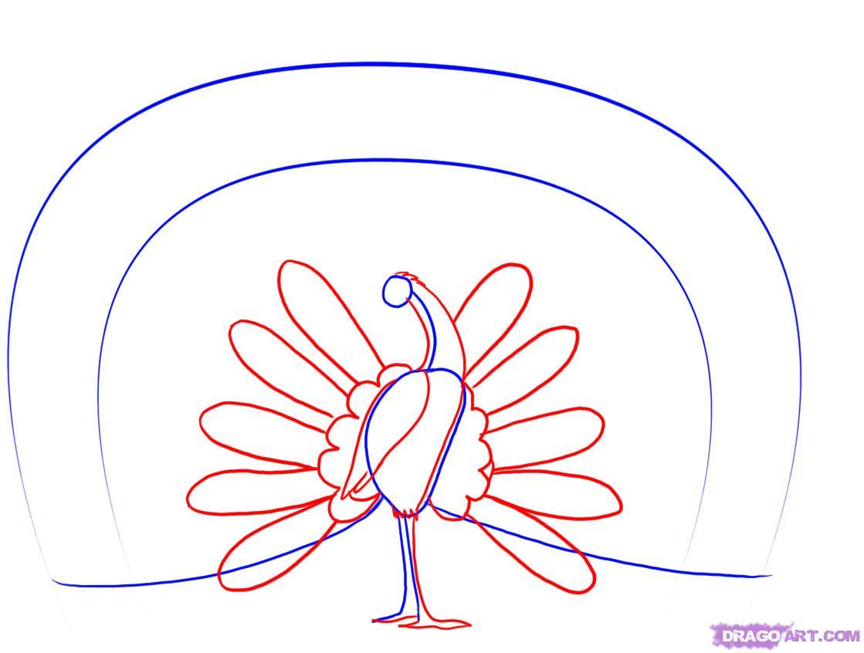 Рисуем павлина - шаг 2