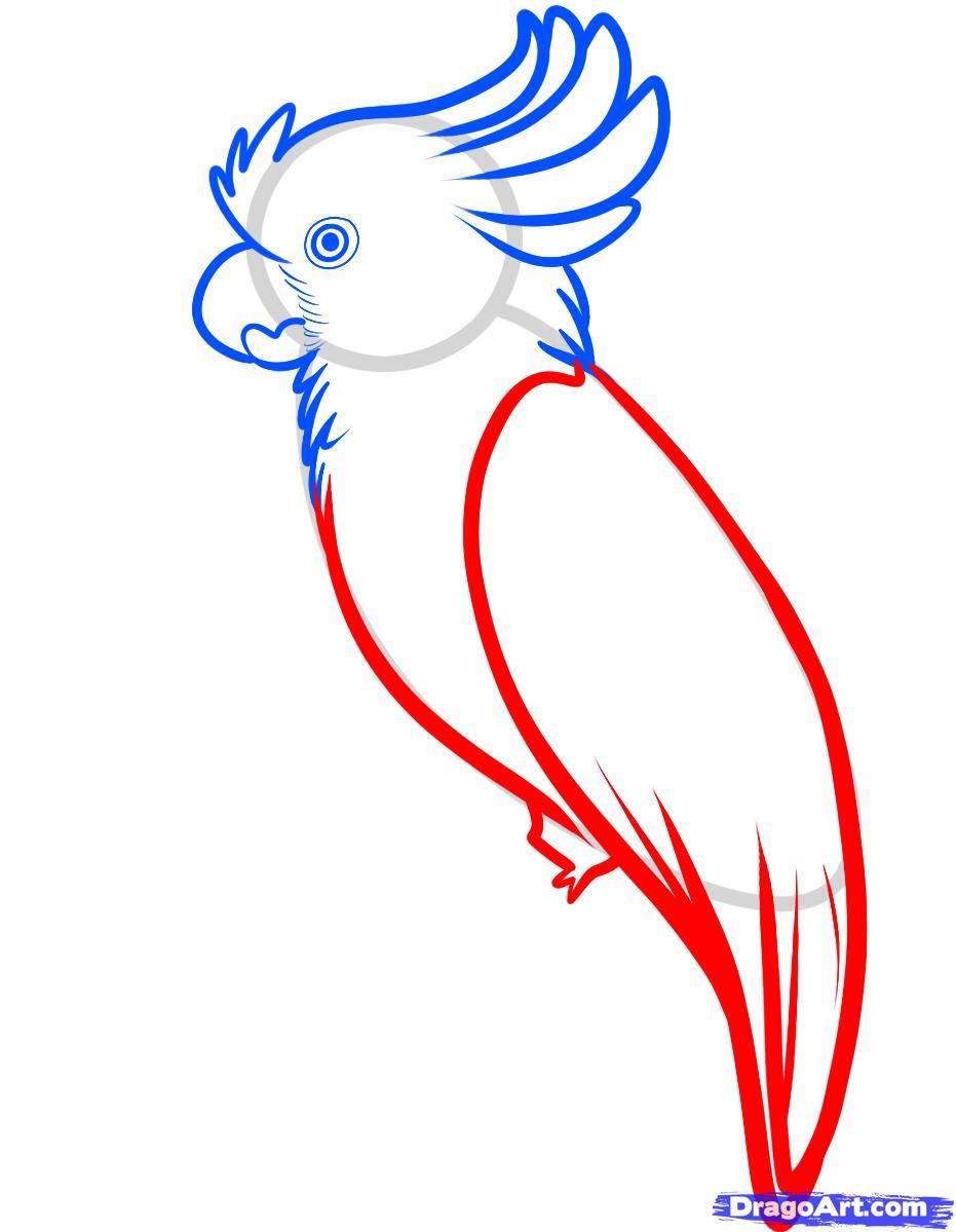 Рисуем попугая Какаду карандашами - фото 4