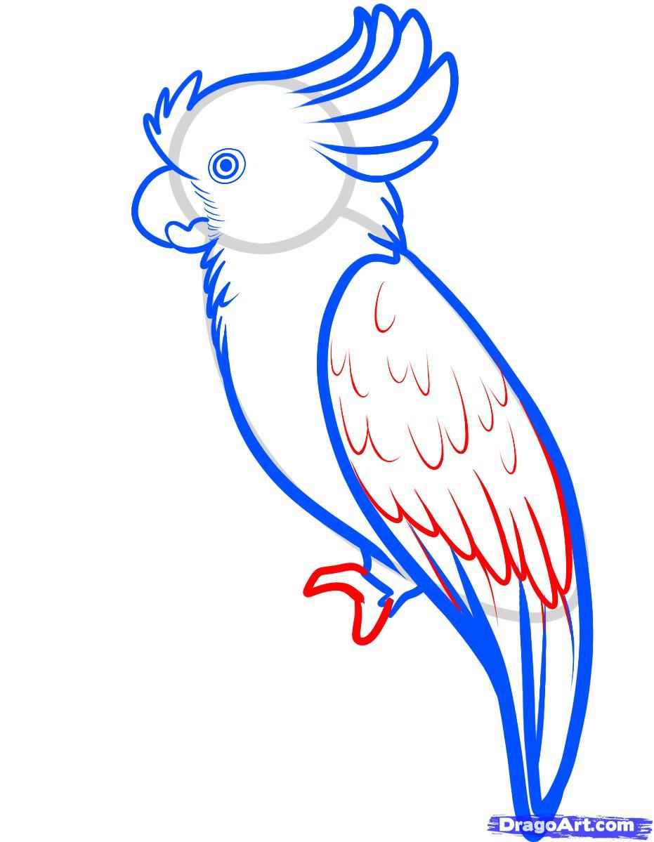 Рисуем попугая Какаду карандашами - фото 5