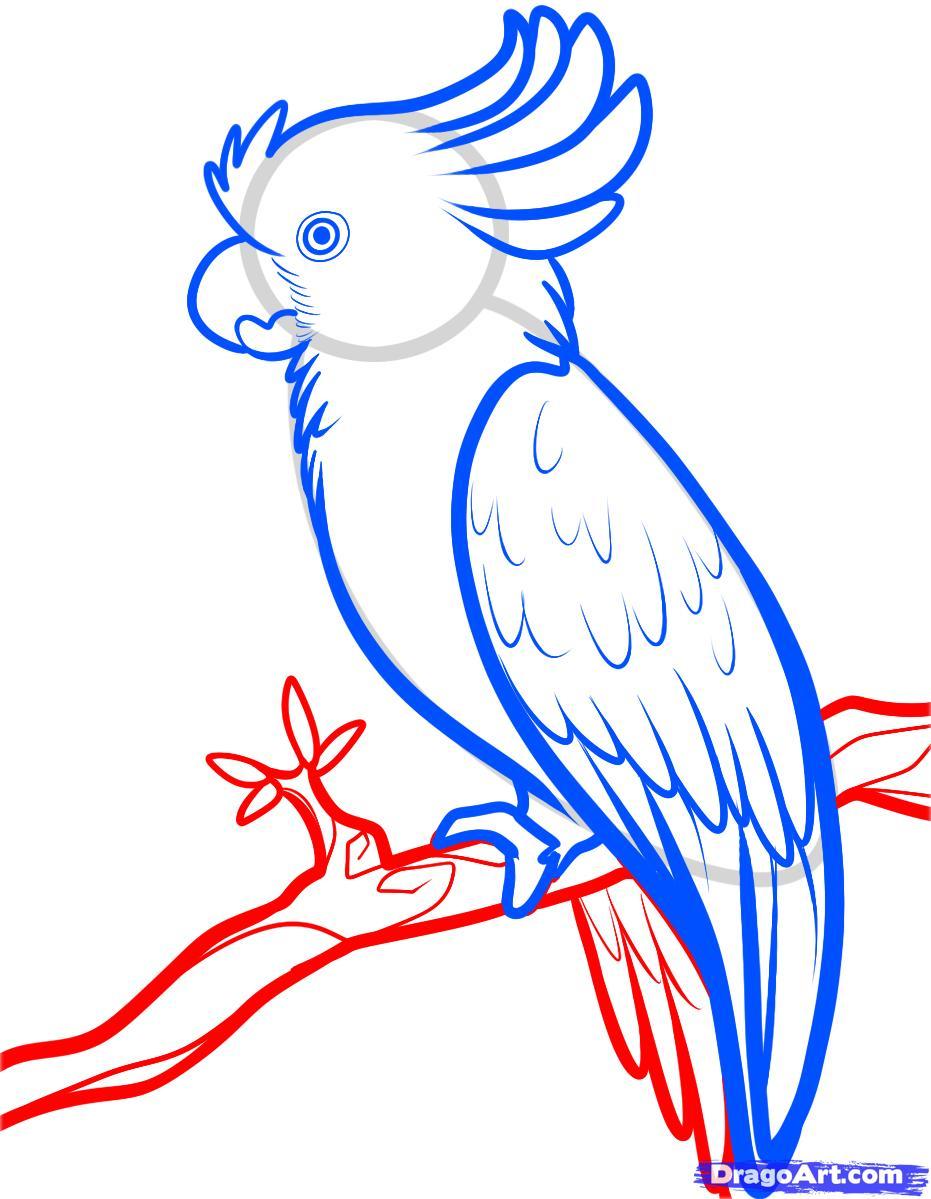Рисуем попугая Какаду карандашами - фото 6