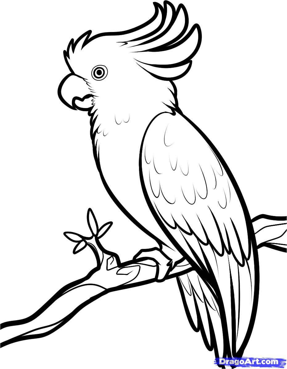 Рисуем попугая Какаду карандашами - фото 7