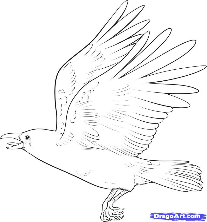 Рисуем ворону - шаг 10