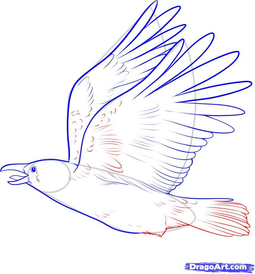 Рисуем ворону - шаг 7