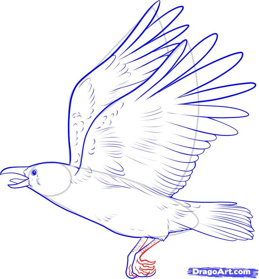 Рисуем ворону - шаг 9