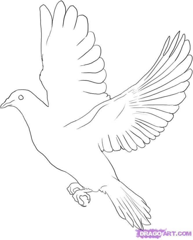 нарисовать голубя поэтапно