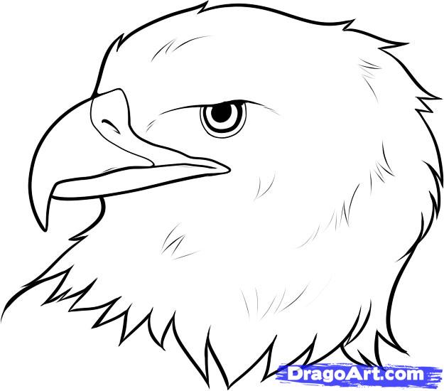 Eagle drawing step by step
