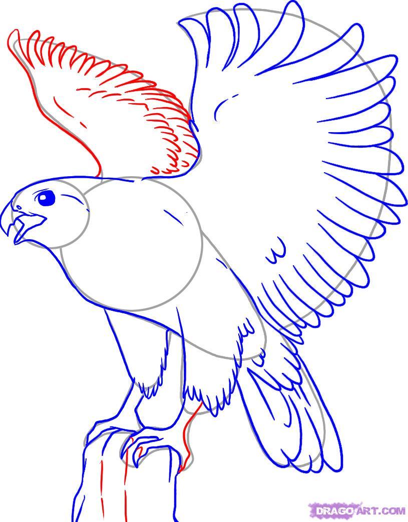 Как нарисовать орла поэтапно