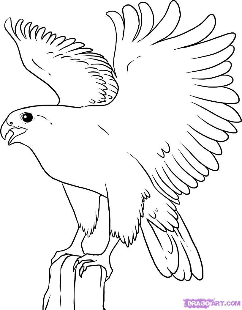 Как нарисовать орёла поэтапно