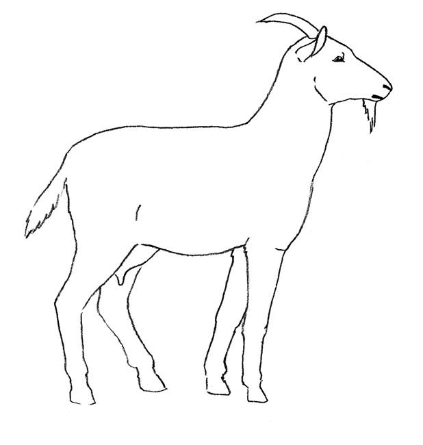 Коза Учимся рисовать.