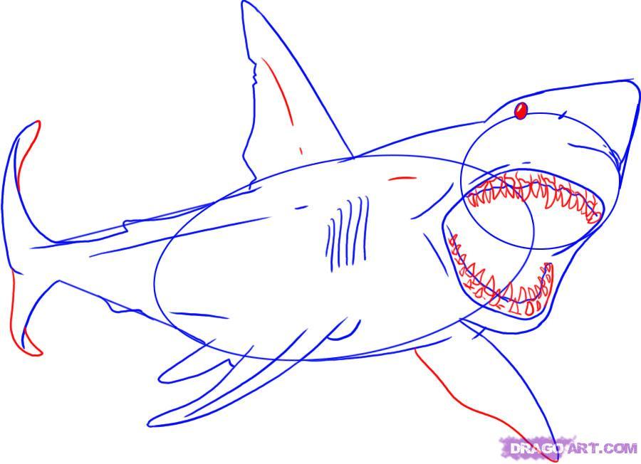 Рисуем акулу карандашами - шаг 4