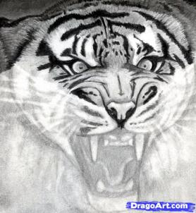 Рисуем голову тигра - шаг 12