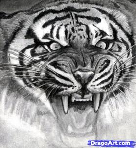 Рисуем голову тигра - шаг 16