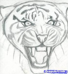 Рисуем голову тигра - шаг 5
